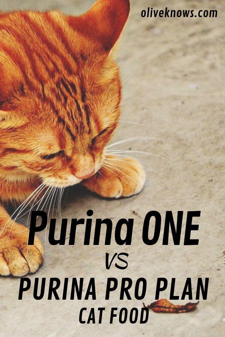 Purina One Vs Purina Pro Plan Cat Food 2020 Update Oliveknows Cat Food Sick Cat Cats