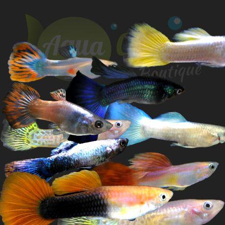 Vente de poisson aquarium 28 images vente poisson d for Vente de poisson