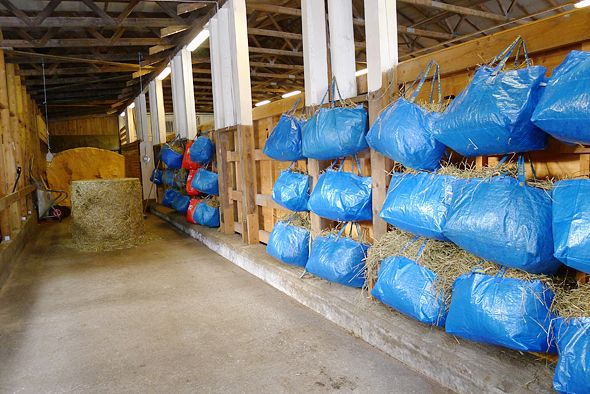 Blue IKEA shopping bags used for hay.