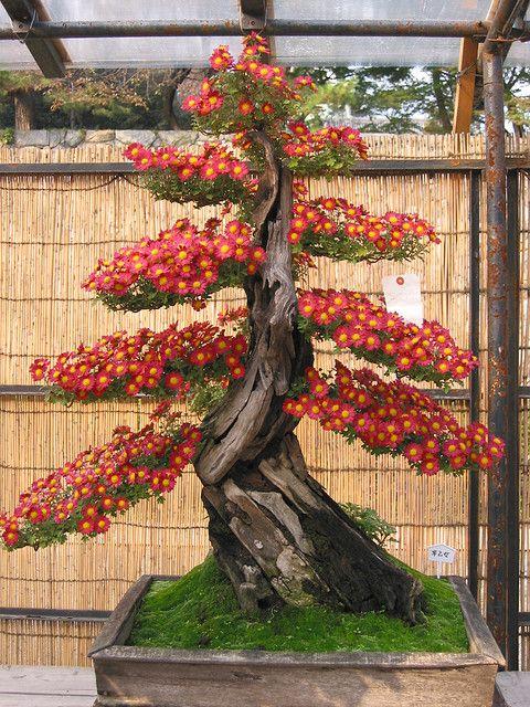 Bonsai Trees http://vur.me/tbw/Bonsai-Tree-Secrets