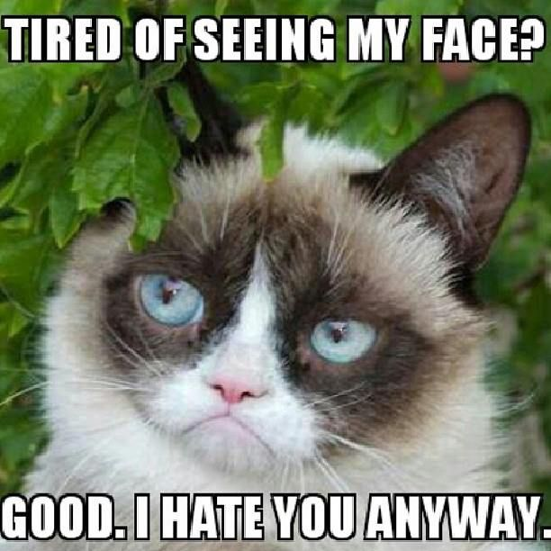 Funny Cat Face Meme : Best images about sayings on pinterest grumpy cat