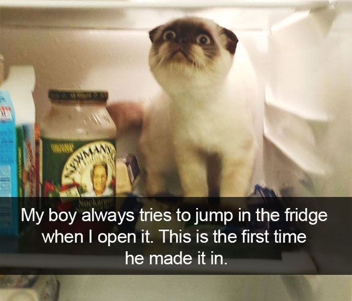60 Funny Pictures For Today (#75)