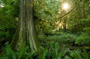Canadian forest - Ecosia