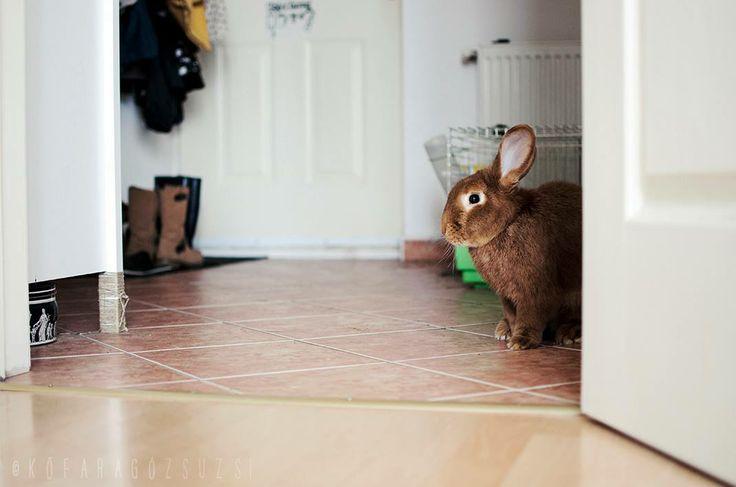 bunny by kofaragozsuzsiphotos