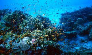 PlongéeBleue Sud, votre club de plongée à Banyuls sur mer,…