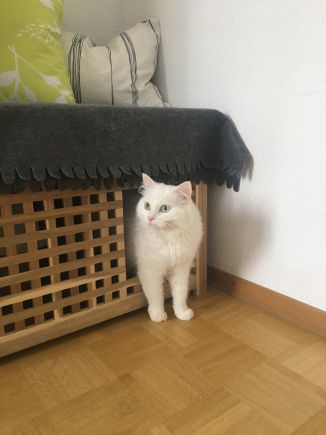 Best IKEA hack for cat owners: the DIY cat litter box! Quick, easy and great hidden.