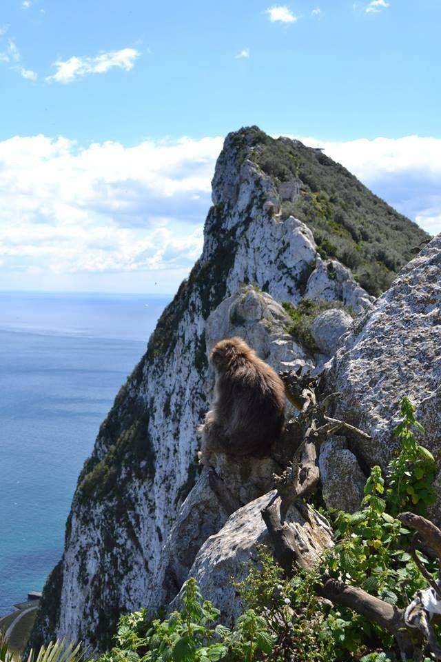 Gibraltár addig marad brit koronagyarmat, míg a majmok itt vannak. http://kozelestavol.cafeblog.hu/2017/11/01/mini-anglia-a-majmok-birodalmaban-gibraltar/