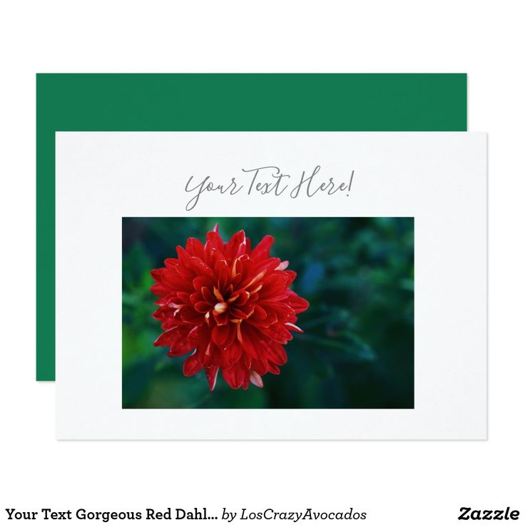 Your Text Gorgeous Red Dahlia Flower Invitation