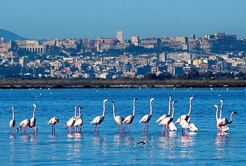 Cagliari -flamingos. Nanny Birds, it has to be the salt lakes between Cagliari and Quartu.