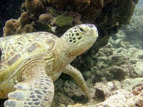 Tun Sakaran, Malaisie | Tun Sakaran Marine Park, Semporna | Sabah Tourist & Travel Guide ...