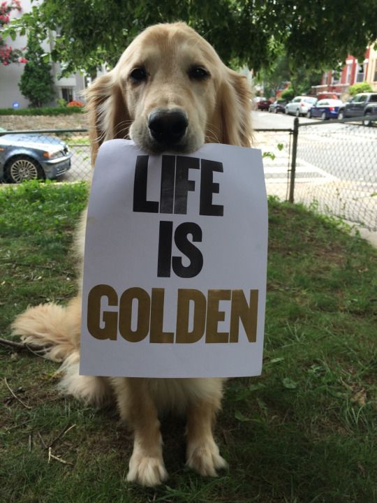 """Life is Golden"""