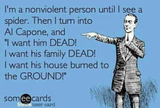 "Ecard: I'm a nonviolent person until I see a spider. Then I turn into Al Capone, and ""I want him DEAD! I want his family DEAD! I want his house burned to the GROUND!"""