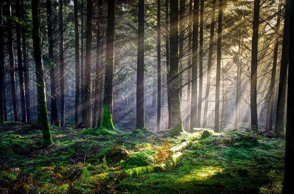 Dunkeld Forest Light, David Mould