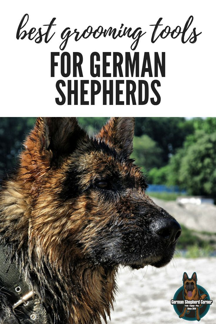 The Best Grooming Tools For German Shepherds With Images