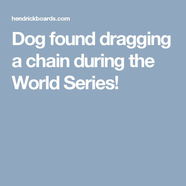 Dog found dragging a chain during the World Series!