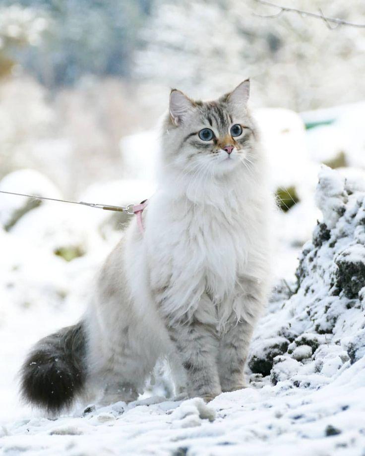 Oh, what is that!?  #catsofinstagram #cats_of_instagram #kattunge #dailyfluff #bestanimal #excellent_cats #katter #bestcats_oftheworld #igcutest_animals #cat_features #cutepetclub #fluffypack #katt #bestmeow #weeklyfluff #meow #AnimalAddicts #kittycat #cat #cats #kitten #kittens #kawaii #instacat #calico #neko #thedailykitten