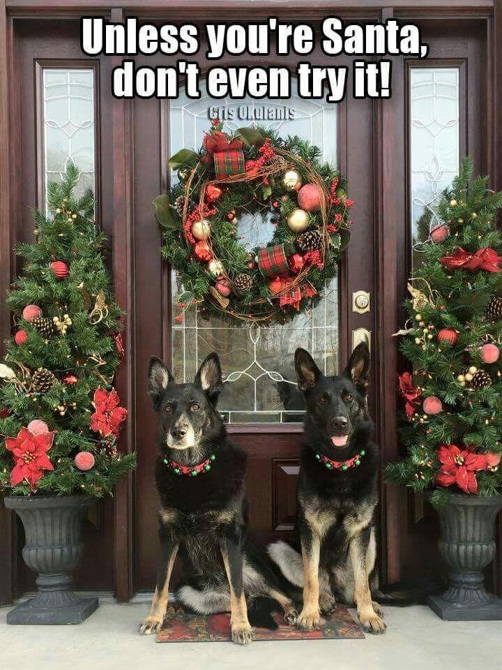 728 best German Shepherd Meme's images on Pinterest ...