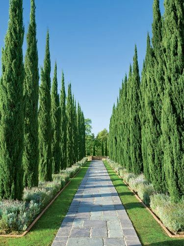 Italian-style allée with cypress trees. Historic Greystone Estate