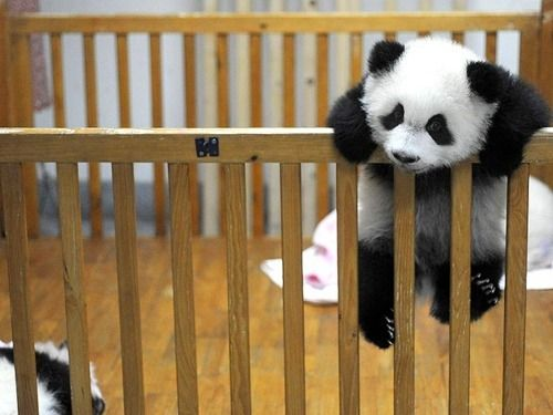 Trying to escape the crib.