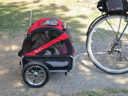 Doggyride Mini Dog Bike Trailer Wish List Pinterest