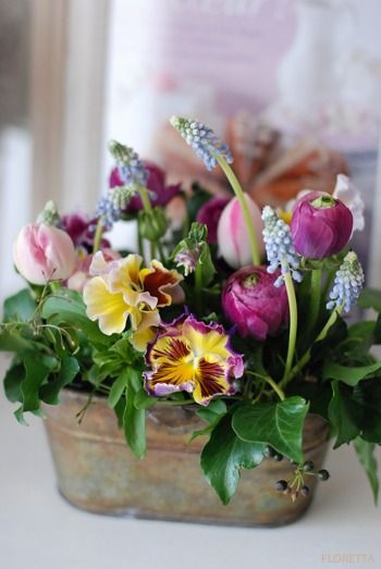 Springtime floral arrangement of tulips, pansies and grape hyacinth