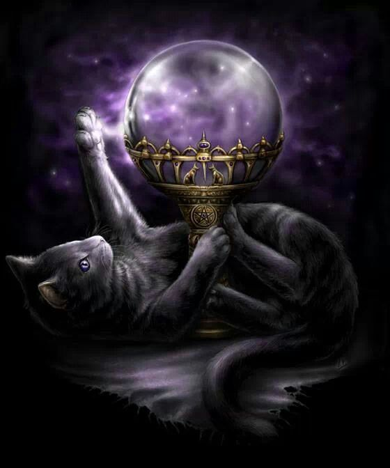 Black Cats In Occultism