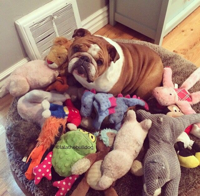 My toys! #Bulldogs