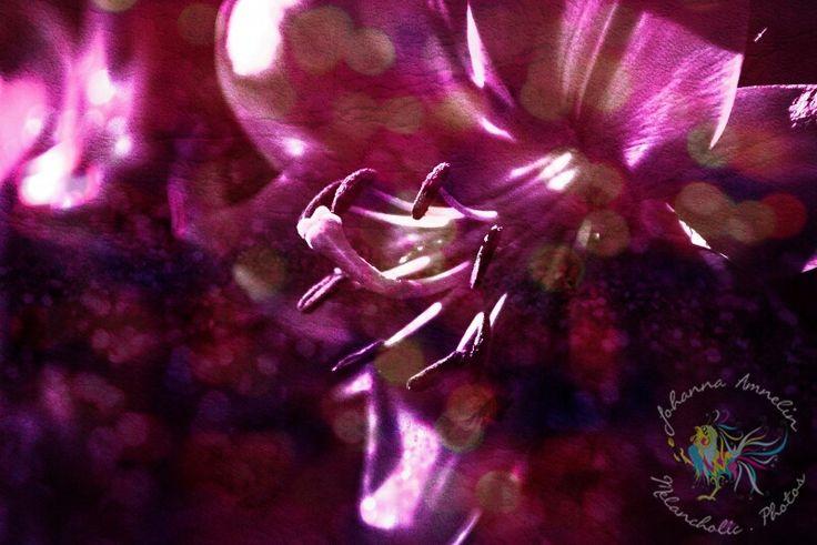 Sexy Lilys series www.melancholic.photos