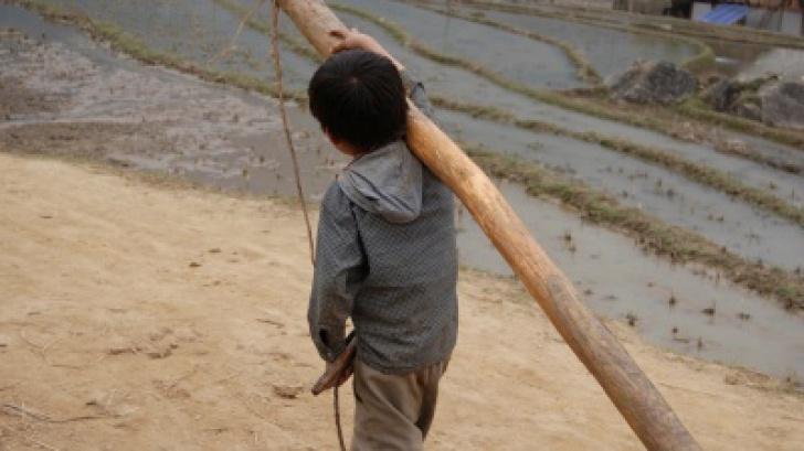 Vaslui: 19 copii, folosiţi ilegal la muncă. Administratorul s-a ales cu DOSAR PENAL Stiri online de ultima ora