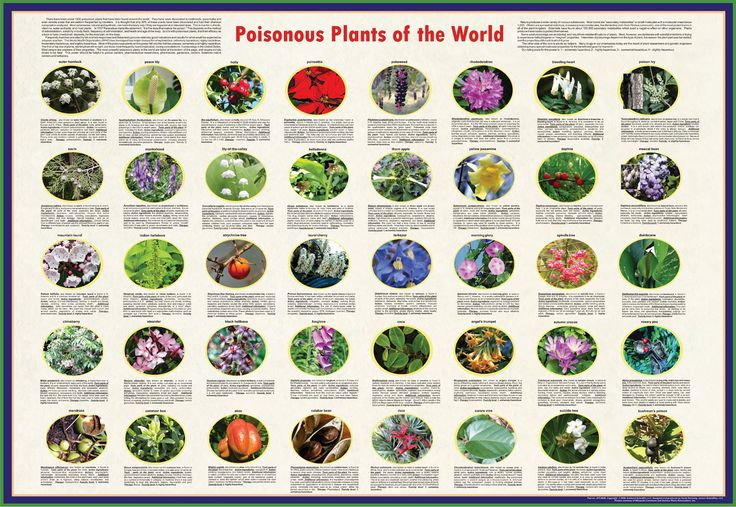 9 best srp stem do it yourself discovery table ideas images on one week have a poster with poisonous and non poisonous plants pictured on it with solutioingenieria Gallery