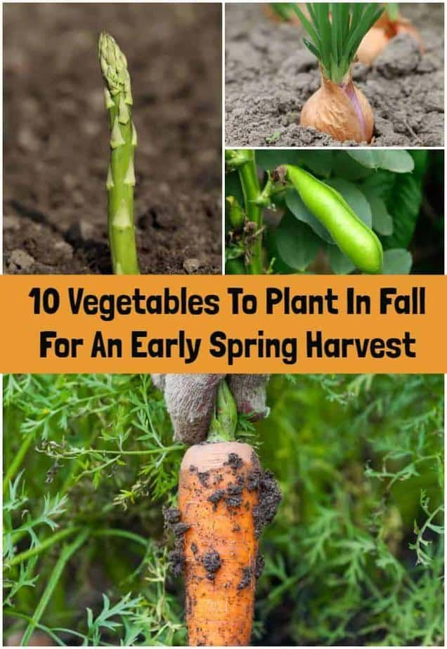 10 Vegetables To Plant In Fall For An Early Spring Harvest Fall Vegetables To Plant Fall Vegetables Fall Garden Vegetables