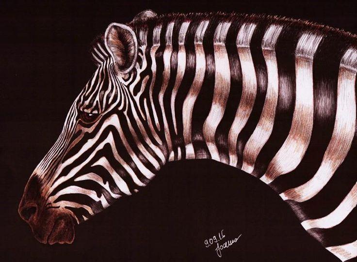 Zebra By Joanna Karocka