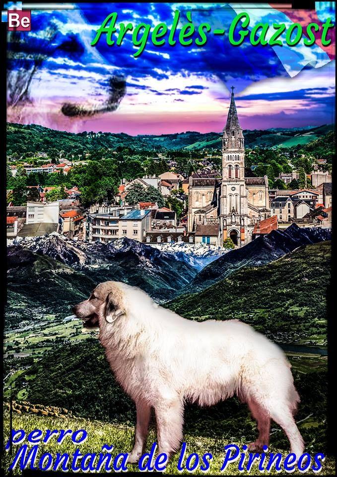 perro Montaña del Pirineo.ARGELES -FRANCIA