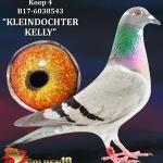 "004 - B17-6038543 ""KLEINDOCHTER KELLY"" ♀ | De Duif"