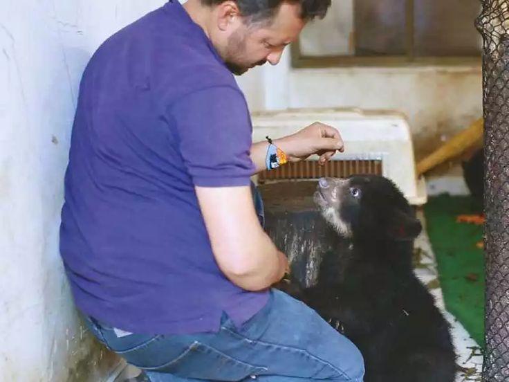 LOS ANTEOJOS DE FELICIANO - Orlando Feliciano trabaja en su gran sueño: quedarse sin trabajo. Quiere que los emblemáticos osos de anteojos, que llegan a medir hasta 1,80 metros, vivan en hábitats saludables, libres de amenazas y lo dejen sin oficio. Lidera dos centros de rehabilitación de fauna silvestre, a los que llegan animales  víctimas de cacería o decomisos. El plantígrado de color negro y manchas blancas y amarillentas únicas vive en 26 por ciento del territorio nacional, y cada vez…