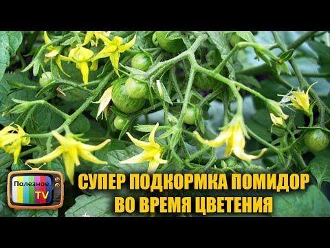 СУПЕР ПОДКОРМКА ПОМИДОР ВО ВРЕМЯ ЦВЕТЕНИЯ ДЛЯ УВЕЛИЧЕНИЯ УРОЖАЯ - YouTube
