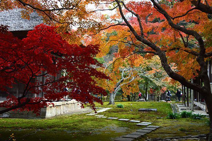 kamakura#北鎌倉#長寿寺#紅葉