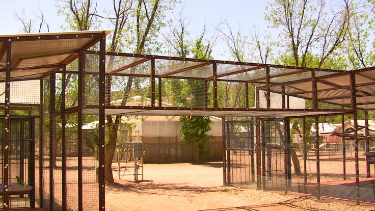 outdoor pet bird aviary, what a great cat enclosure this would make.