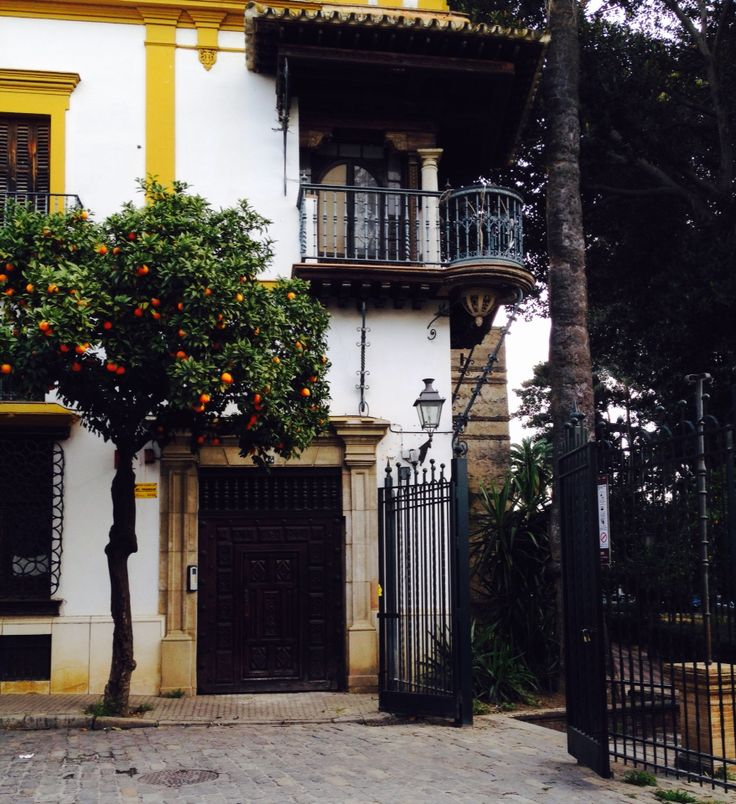 Orange tree naranjo sevillano en los jardines murillo - Orange en sevilla ...