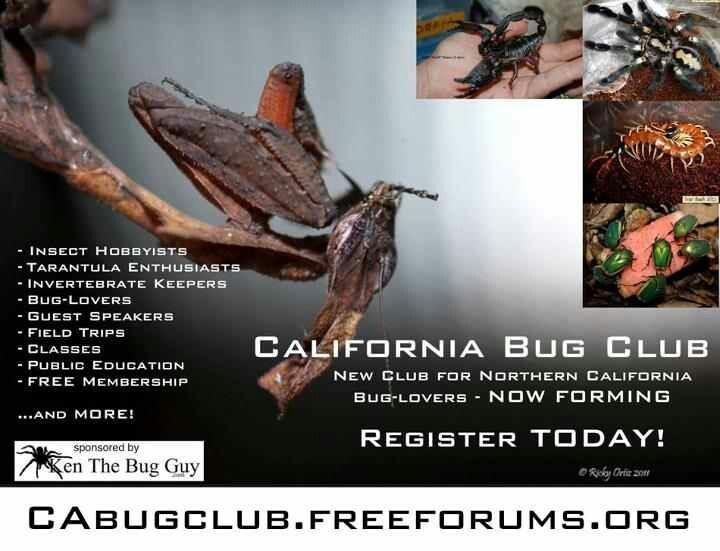 Meetings TBA  CALIFORNIA BUG CLUB Join Today!!!!!!!!