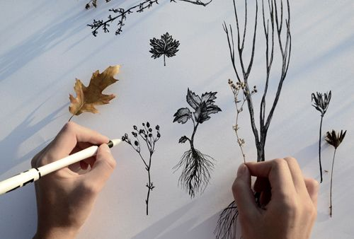 HERBARIUM (work in progress) on Behance