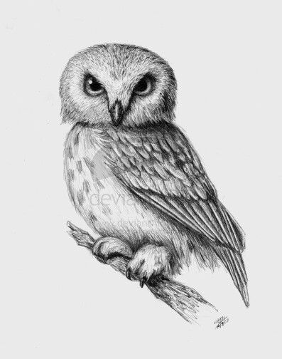 'Owl' by Mrs. Bobetski