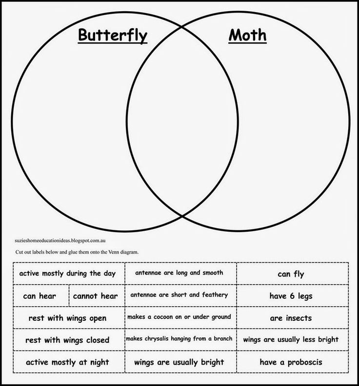 Life Cycle of a Moth - FREE Venn Diagram comparing the similarities and…