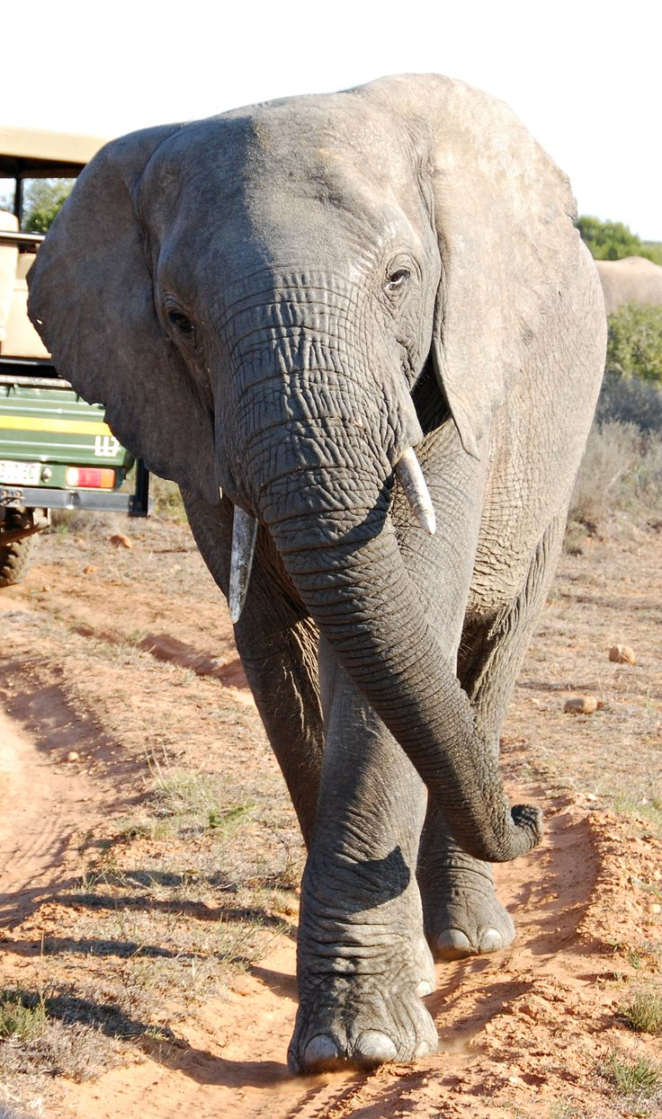 1000  images about Funny Elephant on Pinterest