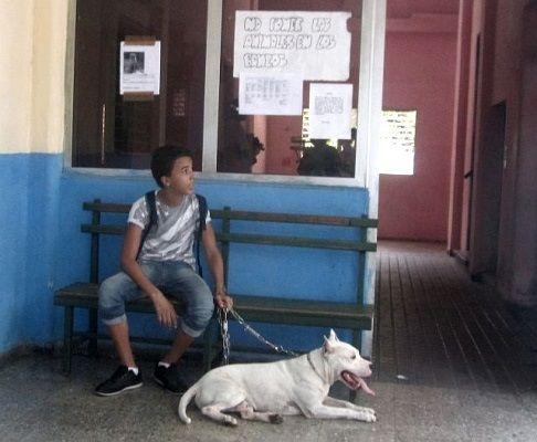 En Cuba no sólo se violan los derechos ciudadanos, sino que tampoco interesa la protección de los animales.