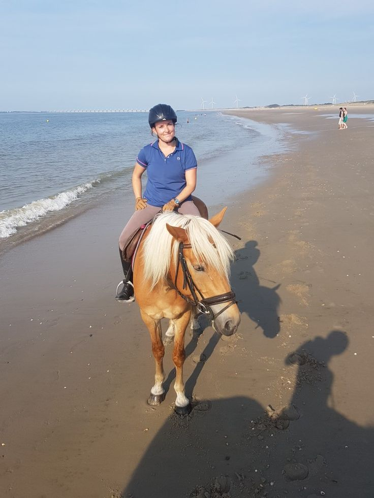 Awesome trail ride on the beaches of Zeeland in the Netherlands 😍😍🐎🐎