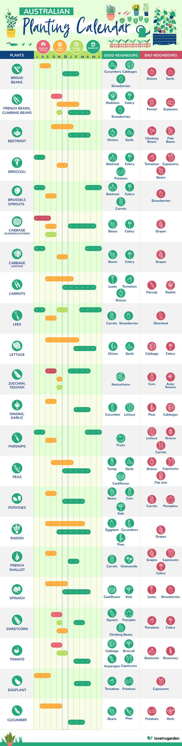 Planting Calendar Infographic In 2021 Planting Calendar What To Plant When Garden Calendar
