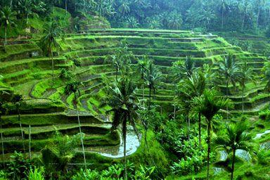 Visit Bali's gorgeous rice terraces!!!