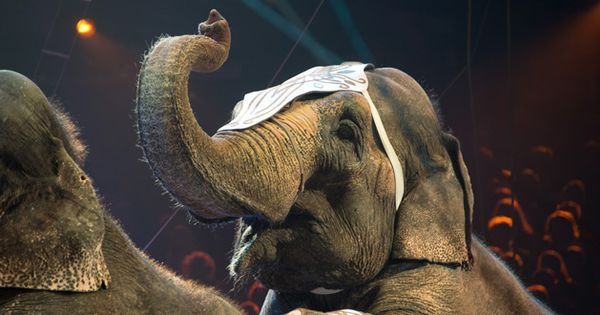 New Jersey Makes History By Banning Wild Animal Circus Acts Animals Wild Circus Animals Animals