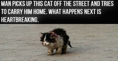 Here at TheMeowPost.com, we hear a lot of stories, but some really hit us right in the heart - so much that we can't help but cry and this story about 'Ugly The Cat' did just that. This poor abandoned kitten was wondering on the streets and nobody helped him - people even shy'